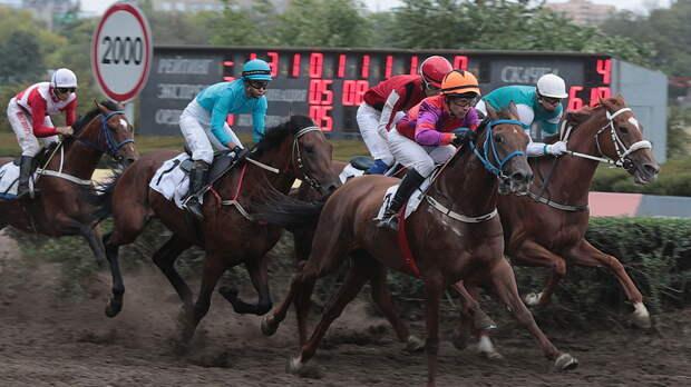 Активисты настаивают на возрождении донской породы лошадей в Ростове