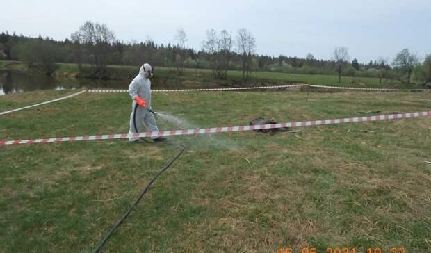Мертвого кабана с признаками африканской чумы обнаружили в Удмуртии
