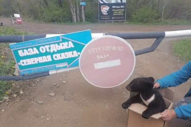 Ручного гималайского медвежонка подбросили в коробке в Приморье