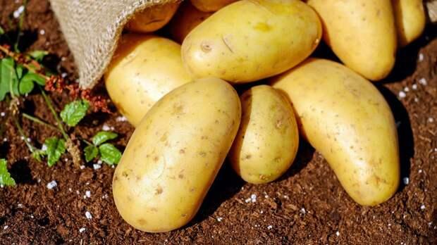 Юрист объяснила штрафы за выращивание картофеля