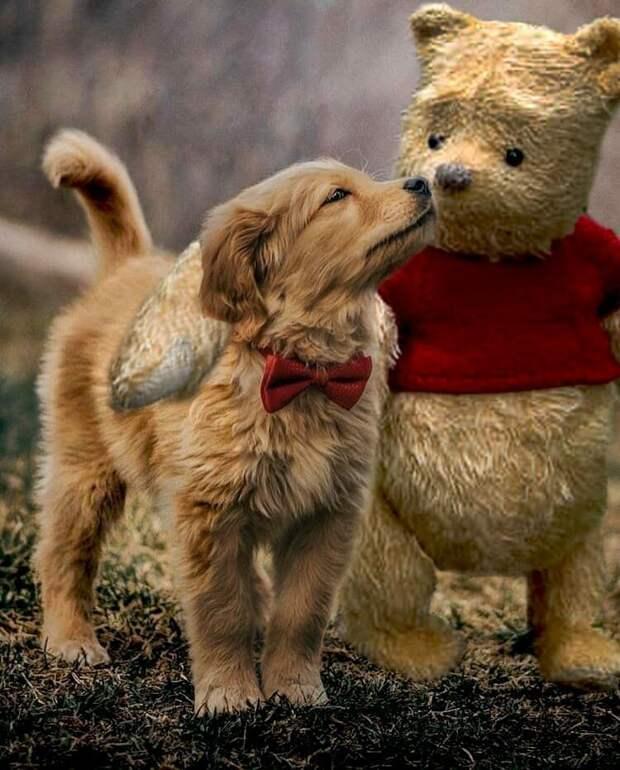 По мнению одного из авторов, пёсик подружился бы и с новым Винни-Пухом бабочка, баттл, милота, пес, подборка, собака, фотошоп