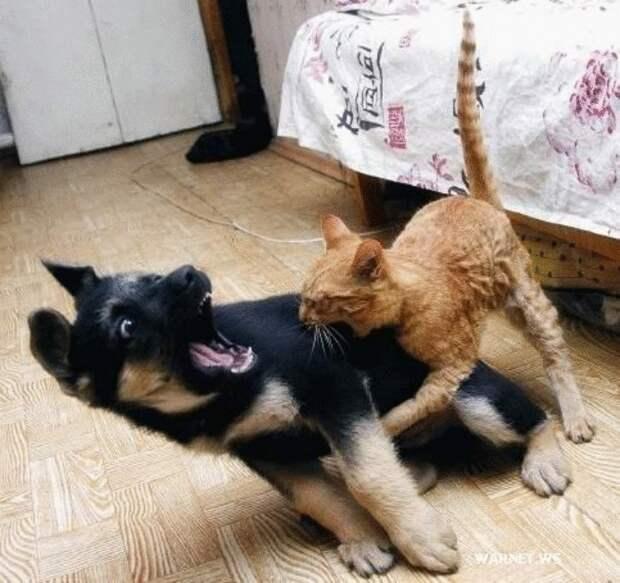 15 фото кошек и собак, которые ведут себя странно, но кадры получаются отменные