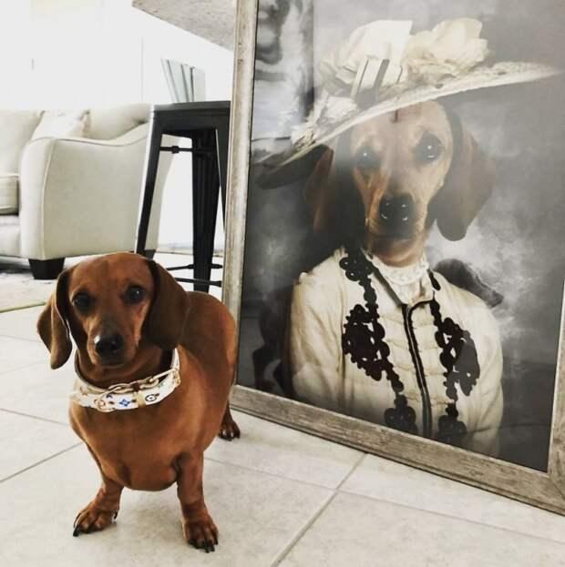 Великолепные портреты питомцев в высоком стиле