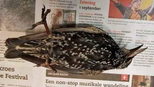 Сотни птиц погибли во время запуска 5G интернета в Нидерландах.