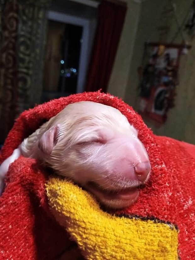 новорожденный щенок