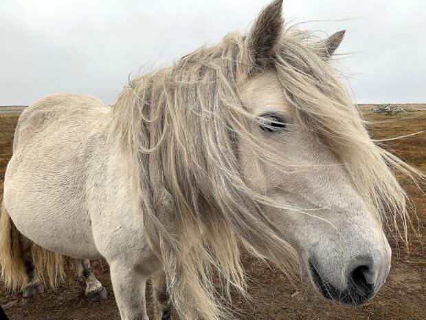 Кузомень: деревня, где живут дикие лошади