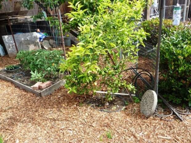 Украшение садового участка своими руками - оформление дачи своими руками (13)