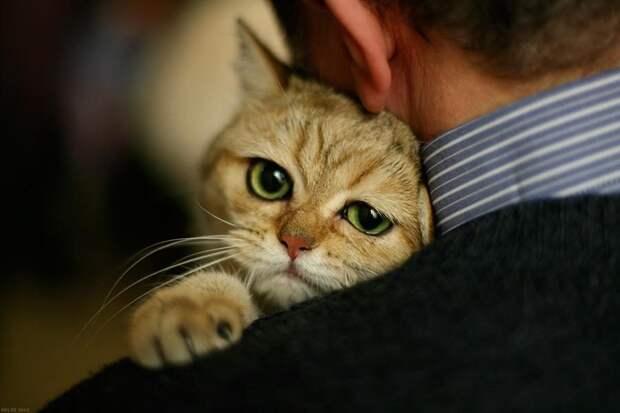 Средняя продолжительность жизни кошек составляет 10-15 лет.