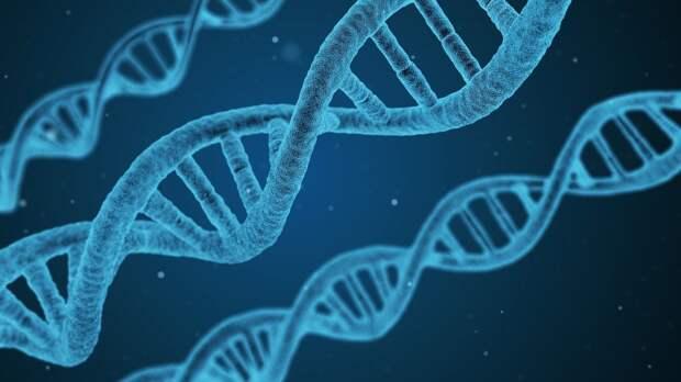 Генетики смогли установить личность участника экспедиции Франклина с помощью анализа ДНК