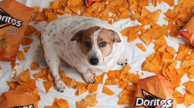 dog and Doritos