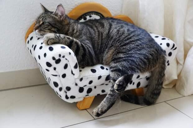 кошка на фото