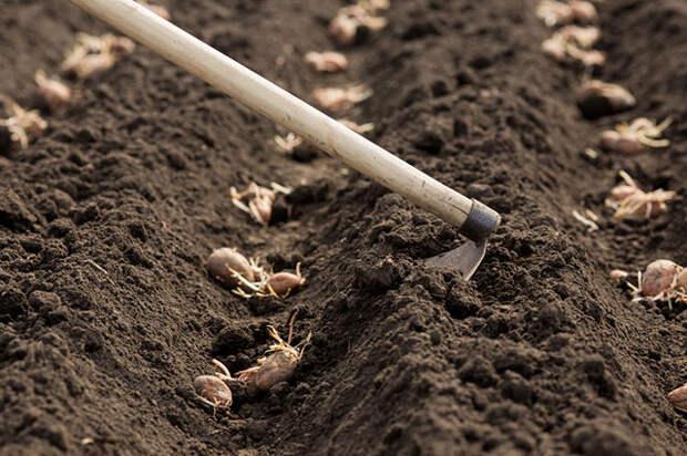 Как правильно и в срок посадить картошку?