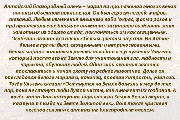 Легенда о Белом марале!