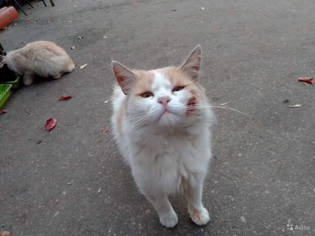На Avito опубликовали объявление о пристройстве домика вместе с кошками в добрые руки
