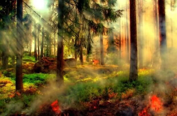 В Турции российским курортникам пришлось эвакуироваться из-за лесных пожаров