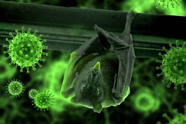 2% населения Земли заразилось коронавирусом