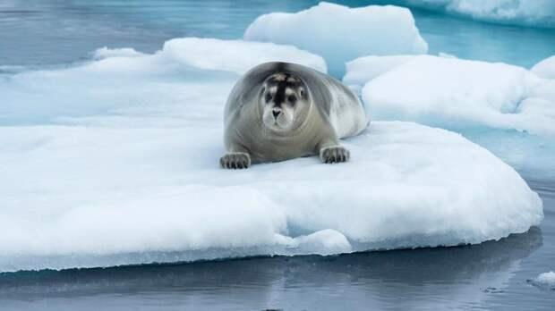 Морской заяц и бонго могут поселиться в зоопарке Москвы