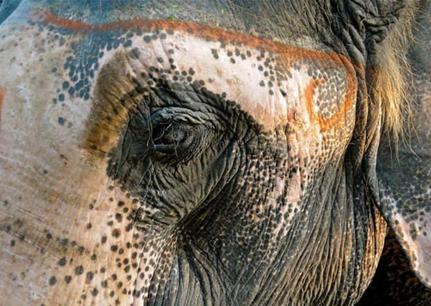 Упс, кажется, краска закончилась…)) Животные с самыми необычными окрасами!