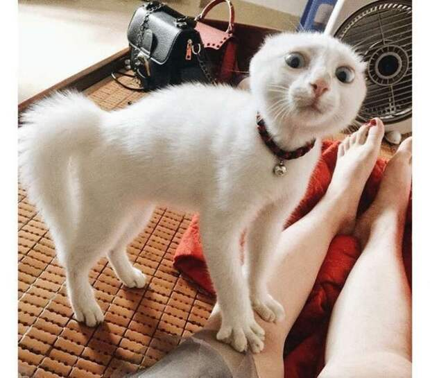50 оттенков кошачьего удивления. Фото котеек, которые изрядно вас повеселят
