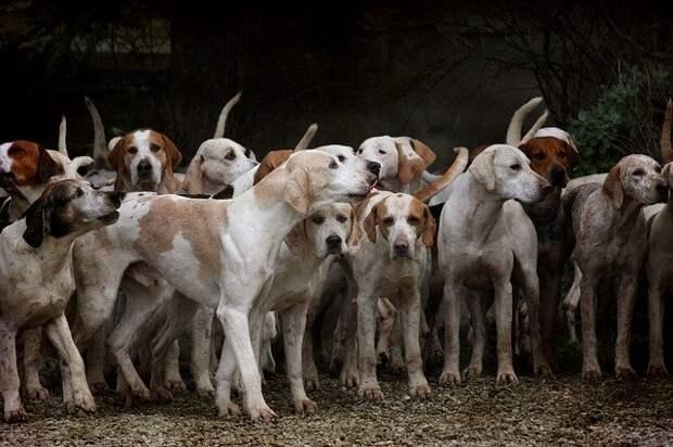 Воющие собаки, сожженные заживо в печи Колбрука