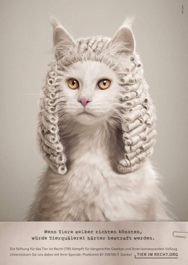 Что случилось с котиком?