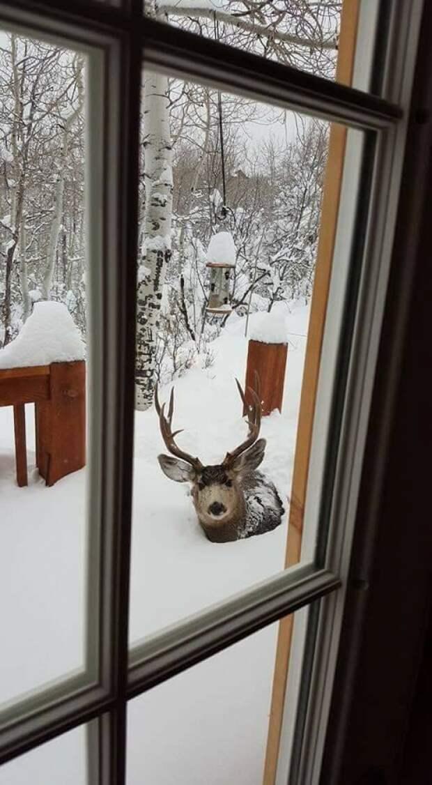 Если все еще считаете, что плохо переносите зиму, просто посмотрите эти 27 фото