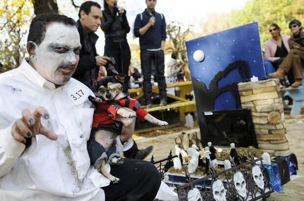 Приуроченный к Хэллоуину парад собак стал ярмаркой тщеславия их владельцев