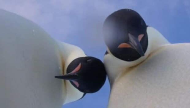Военный эксперт уверен, что НАТО скоро начнет защищать пингвинов в Антарктиде