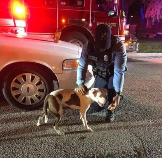 Пес убежал от хозяина на прогулке и этим спас ему жизнь