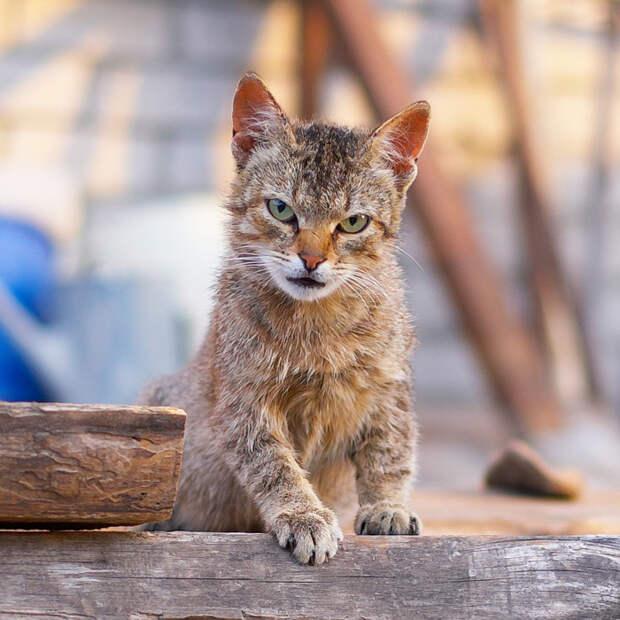Коты деревенские...
