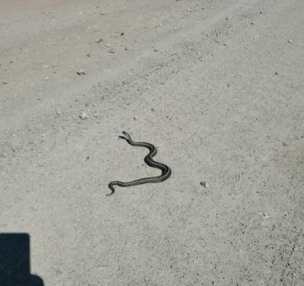 В Луганске активизировались ядовитые змеи