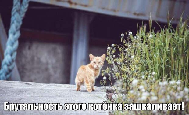 1453486520_foto-10