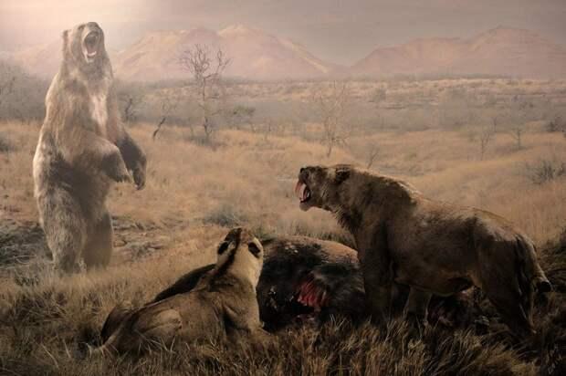 Из-за древних предков человека крупные хищники плиоцена вынуждены были голодать / Фото: pinterest.com