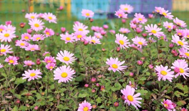 На цветники в Ленинском районе Орска власти выделили более 2 млн рублей