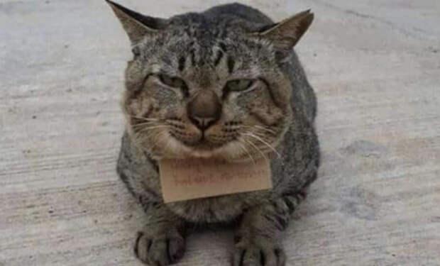 Кот пропал из дома на 3 дня. Когда его уже перестали ждать, кот вернулся сытый и принес записку