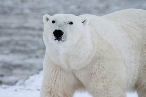 В Северном Тушине покажут фильмы об Арктике