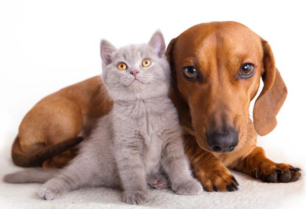 В России посчитают всех кошек и собак. Чего ждать их хозяевам?