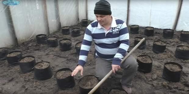 Старый секрет для ранней посадки и урожая томатов