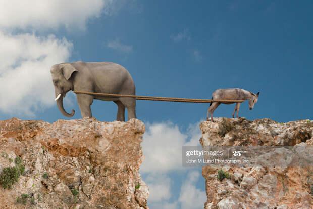 Donkey-Elephant-Tug