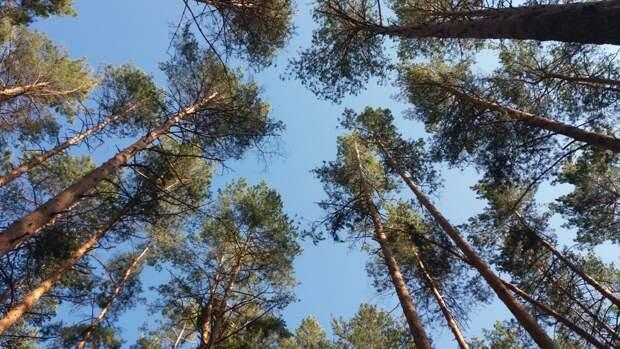Лесные участки в Приморье начали сдавать в аренду на полвека