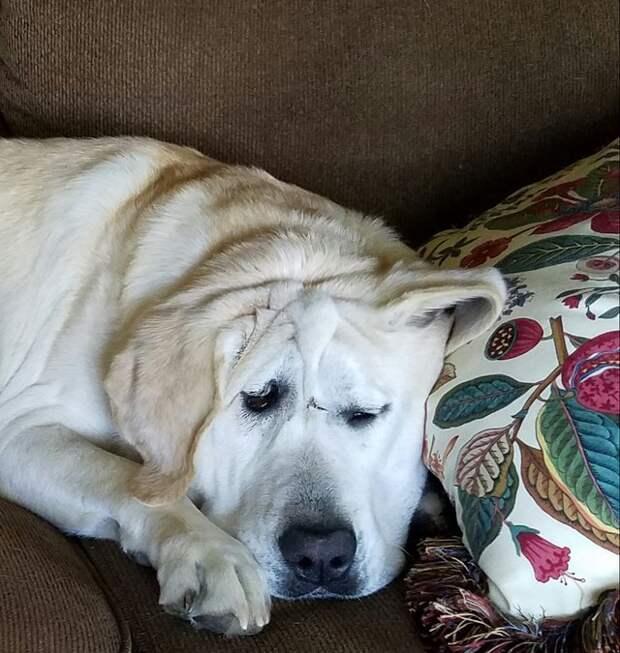 Собака с удивительным лицом: от ужасов заднего двора до любимых рук, пахнущих цветами!