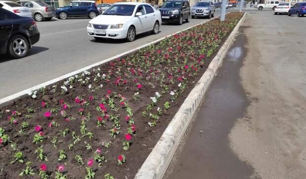 Наклумбах Оренбурга планируют высадить более  одного миллиона цветов