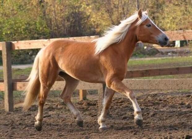 Подборка замечательных и красивых фотографий с лошадями