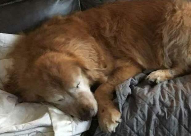 Чарли — хороший мальчик добро, друзья, животные, зрение, история, милота, собака