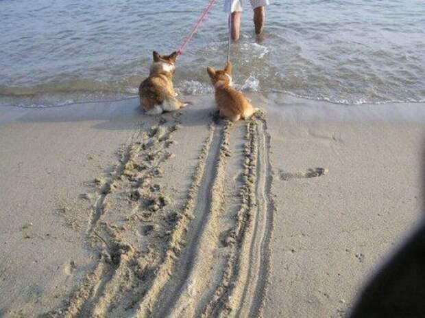 Собачья гидрофобия: 15 собак, которые до жути боятся воды))
