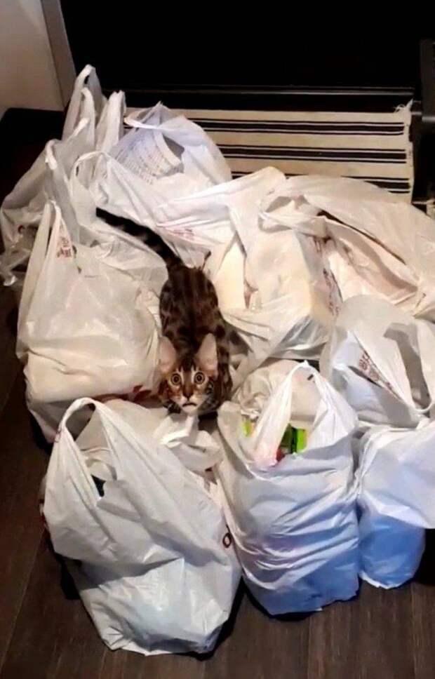 Котик и пакеты