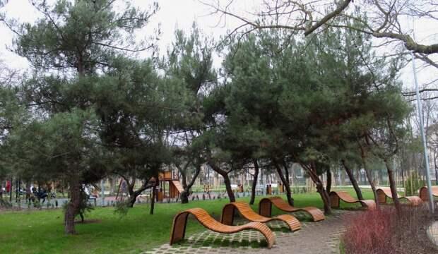 Только суд заставил чиновников посчитать деревья в Севастополе