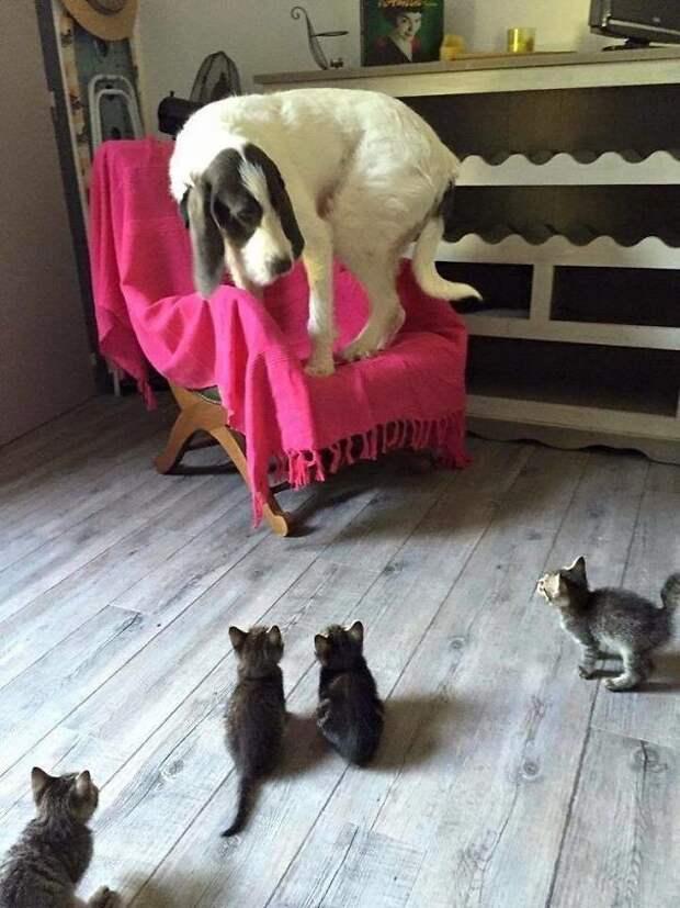 26. Страх перед котятами животные, жизнь, кот, питомец, семья, собака, фото