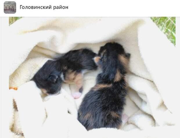 В Головинском для брошенных котят нашлась новая «мама»