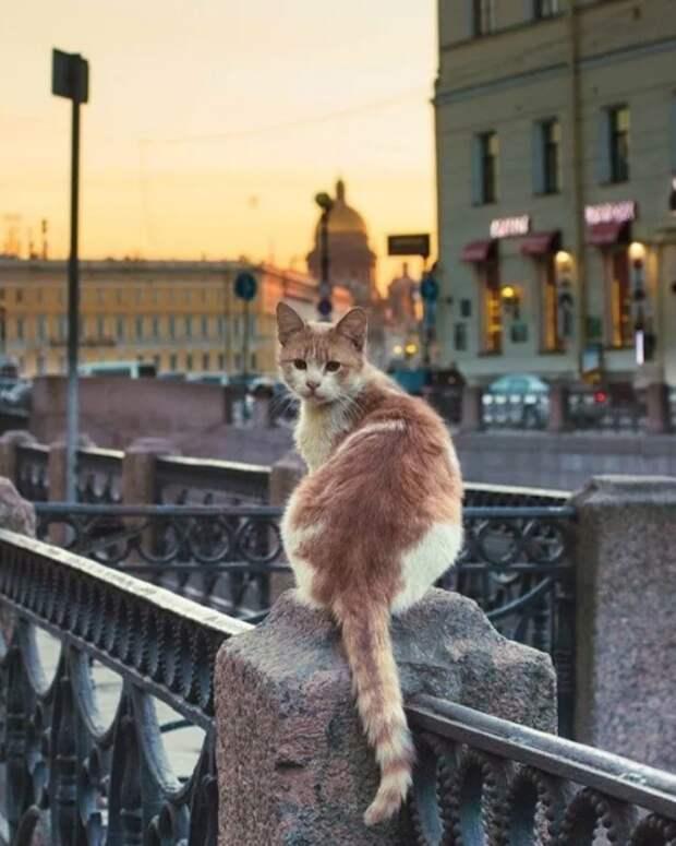 коты в горде